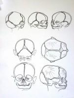 crâne bb