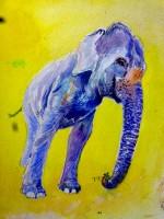 éléphante