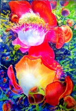 rose 1m x 70