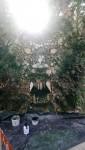 bucher loup garou ; gevaudan 2020