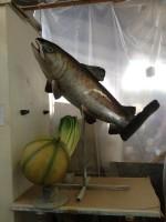 peinture poisson et autre:\