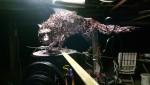 maquette loup, acier soudure autogène