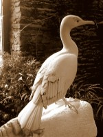 taille oiseau muséographie cité des sciences paris