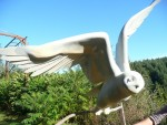 oiseau muséographie C/ boubousan
